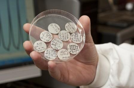 makrofilm nanotube karbon terfragmentasi atau fragmented carbon nanotube macrofilms (FCNT)