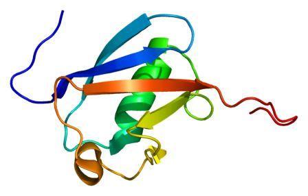 2′-5′-oligoadenylate synthetase-like, OASL. (Image: PDB 1wh3)