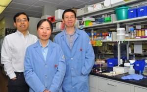 Qingsheng Li (kiri), Wei Niu dan Jiantao Guo. (Credit: Troy Fedderson | University Communications)