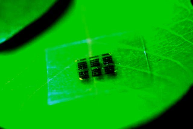 chip, nanofibril selulosa