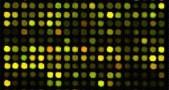 microarray, mikroRNA