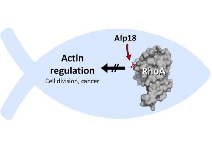 Afp18, patogen, protein Rho