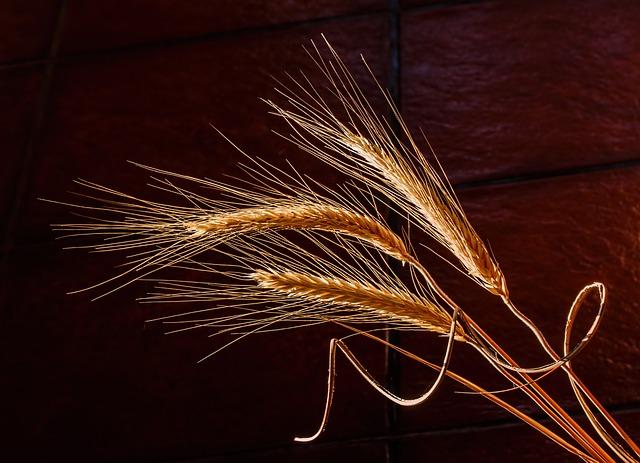 jelai, barley