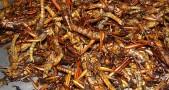 belalang, goreng