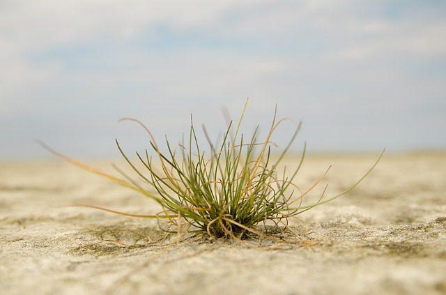 tanaman, kekeringan