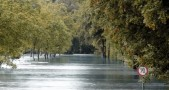 banjir, pohon