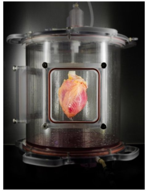 jantung, pluripotent stem cell, bioreaktor