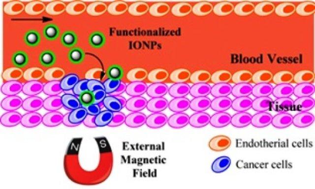nanopartikel magnetik ,besi oksida, biomedis