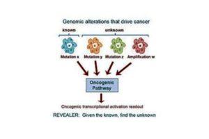 variasi genomik, kanker, alogaritma komputer