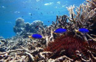 karang mati, great barrier reef