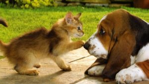 Tips Memelihara Hewan Bagi Yang Punya Alergi Dengan Kucinag/Anjing